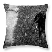 Chocolate Temptation Throw Pillow by Mike Grubb
