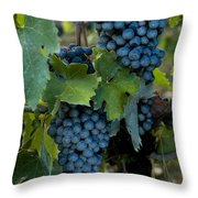 Close View Of Chianti Grapes Growing Throw Pillow by Todd Gipstein