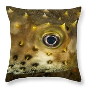 Closeup Of A Yellowspotted Burrfish Throw Pillow by Tim Laman