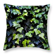 Common Ivy Throw Pillow by Fabrizio Troiani
