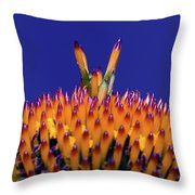 Coneflower Study Throw Pillow by Betty LaRue