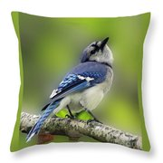 Curious Blue Jay Throw Pillow by Inspired Nature Photography Fine Art Photography