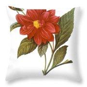 DAHLIA (DAHLIA PINNATA) Throw Pillow by Granger