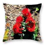 Dahlia Flowers Throw Pillow by Corey Ford