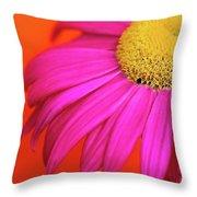 Delight Throw Pillow by Lisa Knechtel