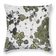 Detail Of Lichen On A White Rock Lake Throw Pillow by Michael Interisano