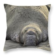 Elephant Seal 3 Throw Pillow by Bob Christopher