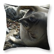 Elephant Seal Throw Pillow by Ernie Echols