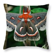Emergence Throw Pillow by Randy Bodkins