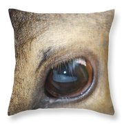 Emotion Throw Pillow by Cathy  Beharriell