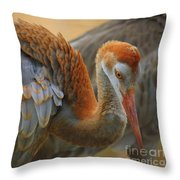 Evolving Sandhill Crane Beauty Throw Pillow by Carol Groenen
