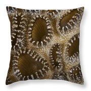 Extreme Close-up Of A Crust Anemone Throw Pillow by Terry Moore