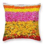 Flower Fields Carlsbad Ca Giant Ranunculus Throw Pillow by Christine Till