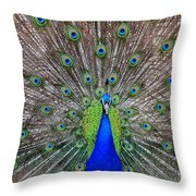 Full Spread Throw Pillow by Angelina Vick