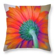 Funky Gerbera Throw Pillow by Amanda Barcon