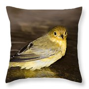 Galapagos Mangrove Warbler Throw Pillow by Dave Fleetham - Printscapes