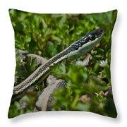 Garter Snake Throw Pillow by Douglas Barnett