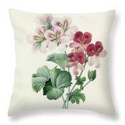 Geranium Variety Throw Pillow by Pierre Joseph Redoute