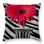 Gerbera Daisy In Striped Vase Throw Pillow by Garry Gay