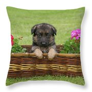 German Shepherd Puppy in Basket Throw Pillow by Sandy Keeton