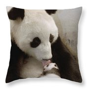Giant Panda Ailuropoda Melanoleuca Xi Throw Pillow by Katherine Feng