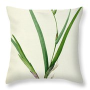Gladiolus Cardinalis Throw Pillow by Pierre Joseph Redoute