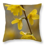 Golden Forsythia Throw Pillow by Kathy Clark