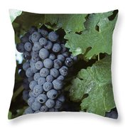 Grapes On The Vine Throw Pillow by Kenneth Garrett
