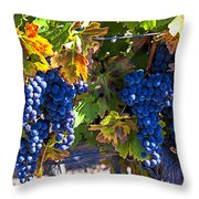 Grapes Ready For Harvest Throw Pillow by Garry Gay