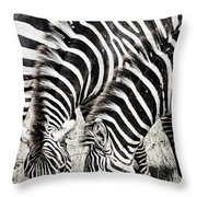 Grazing Zebras Close Up Throw Pillow by Darcy Michaelchuk
