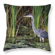Great Blue Heron Throw Pillow by Natural Selection David Spier