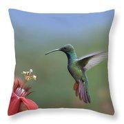 Green Breasted Mango Hummingbird Male Throw Pillow by Tim Fitzharris