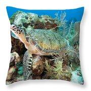 Green Sea Turtle On Caribbean Reef Throw Pillow by Karen Doody