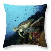 Green Sea Turtle Resting On A Plate Throw Pillow by Mathieu Meur