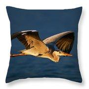 Grey Heron In Flight Throw Pillow by Johan Swanepoel