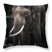 Hanging out Throw Pillow by Joan Carroll