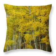 Heavenly Light Throw Pillow by Donna Blackhall