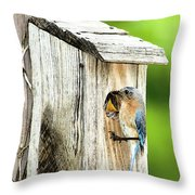 Hello Baby Throw Pillow by Betty LaRue