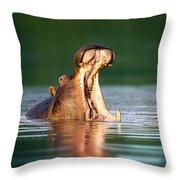 Hippopotamus Throw Pillow by Johan Swanepoel