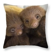 Hoffmanns Two-toed Sloth Choloepus Throw Pillow by Suzi Eszterhas