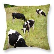 Holstein Cattle Throw Pillow by Gaspar Avila