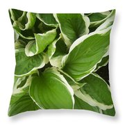 Hostas 1 Throw Pillow by Anna Villarreal Garbis
