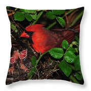 I Have My Eye On You Throw Pillow by Frozen in Time Fine Art Photography