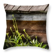 Insect - Spider - Charlottes Web Throw Pillow by Mike Savad