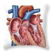 Interior Of Human Heart Throw Pillow by Stocktrek Images