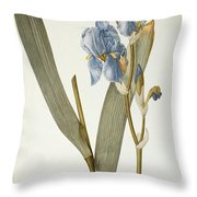 Iris Pallida Throw Pillow by Pierre Joseph Redoute