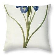Iris Xyphioides Throw Pillow by Pierre Joseph Redoute