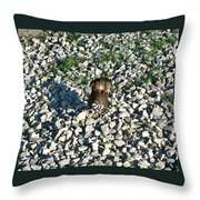 Killdeer 2 Throw Pillow by Douglas Barnett