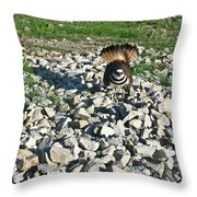 Killdeer 3 Throw Pillow by Douglas Barnett