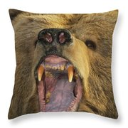Kodiak Bear Ursus Arctos Middendorffi Throw Pillow by Matthias Breiter